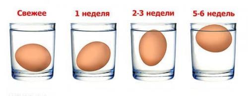 Сколько могут храниться в холодильнике перепелиные яйца. Сколько дней можно хранить яйца