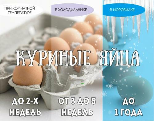 Срок хранения перепелиных яиц в холодильнике сырых. Сроки хранения яиц по ГОСТ
