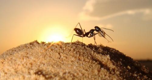 Чего боятся домашние муравьи. Что не любят муравьи в доме и на участке