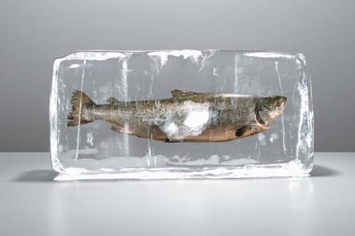 Сколько можно хранить свежую рыбу в холодильнике без заморозки. Заморозка