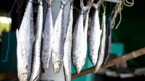 Сколько хранится сушеная рыба. Долгосрочное хранение